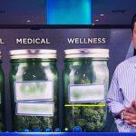 Como investir (legalmente) em Cannabis? Os Day Traders estão a fazer ISTO!